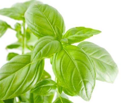 Bylinky - dobré koreninky pre detičky aj dospelých (1.)