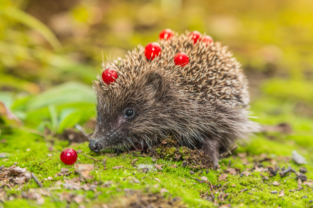 Hádanky o lesných zvieratkách