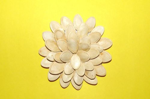 Kvet z tekvicových semiačok
