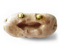 Recepty zo zemiakov
